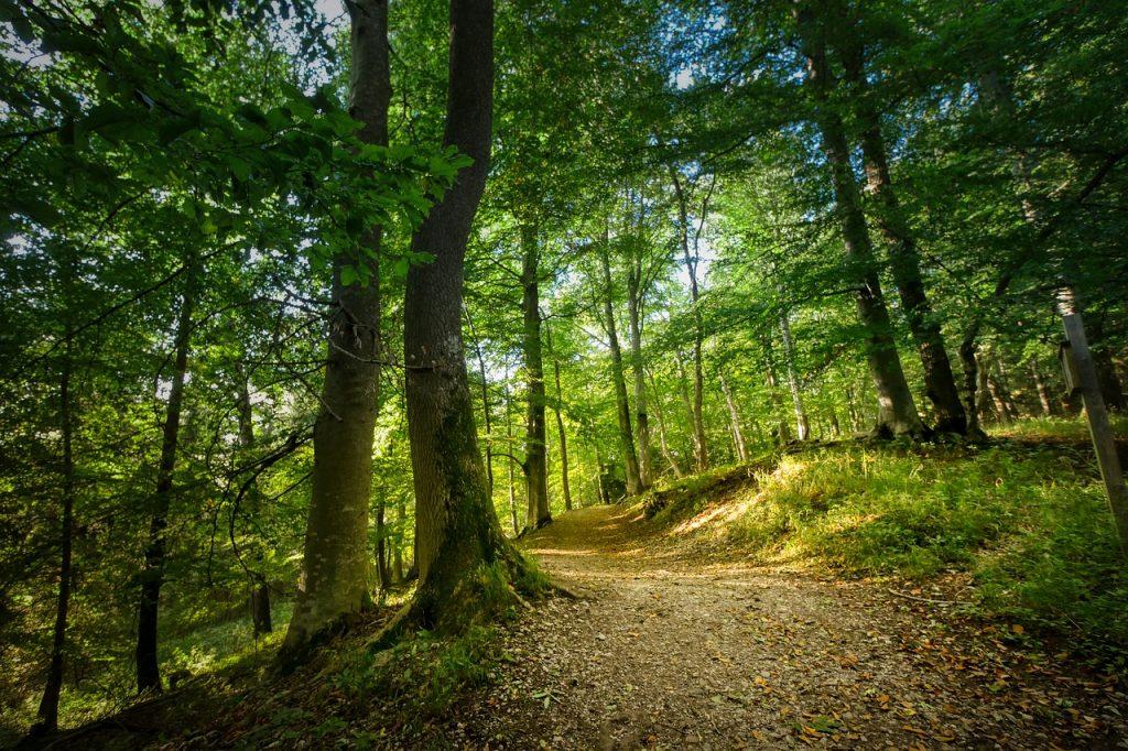 Mindful Walking cursus Dronten